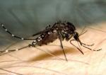 Mosquito Season