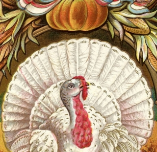 Thanksgiving and Survival