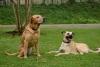 Daisy and Henry ready to run